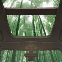 Ford could use bamboo in their cars